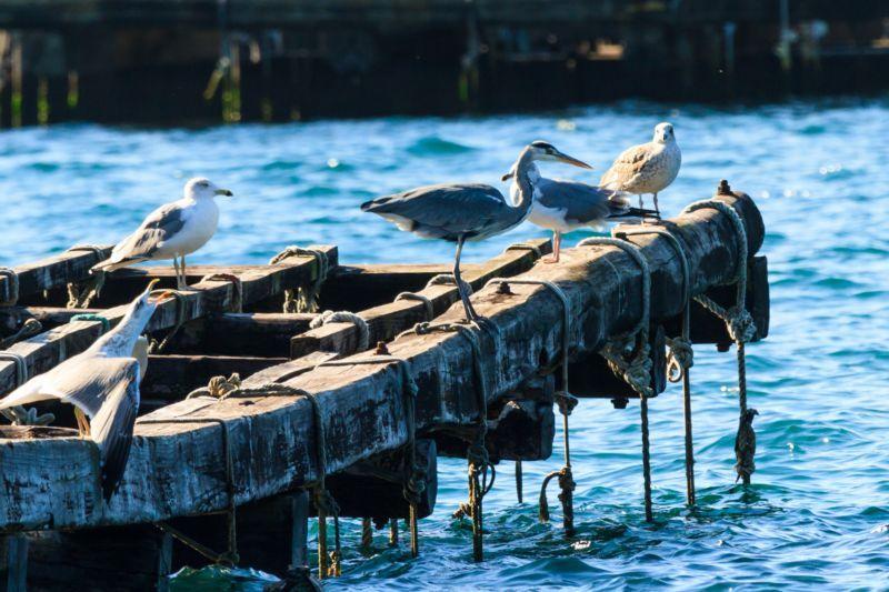 arousa_sailway_charter_galicia