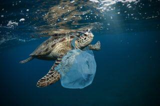 Consecuencias de una mala gestión de residuos